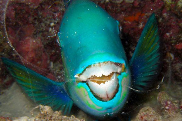 gangehi-diving-11
