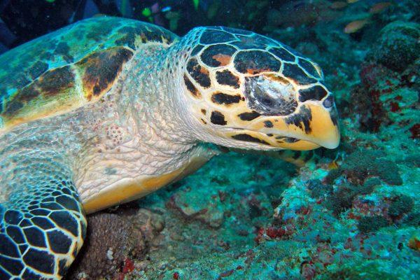 gangehi-diving-12